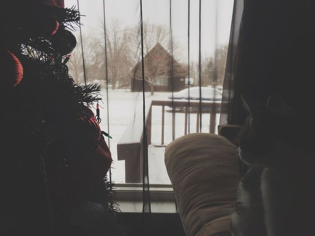 Real People Window One Person Lifestyles Car Transportation Mode Of Transport Land Vehicle Day Looking Through Window Vehicle Interior Warm Clothing Men Cold Temperature Close-up Outdoors Architecture Mammal Cat Christmas Tree Decoration