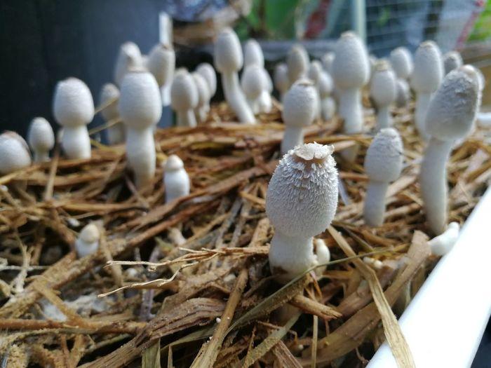 Mushroom Mushroom Farm EyeEm Selects Close-up
