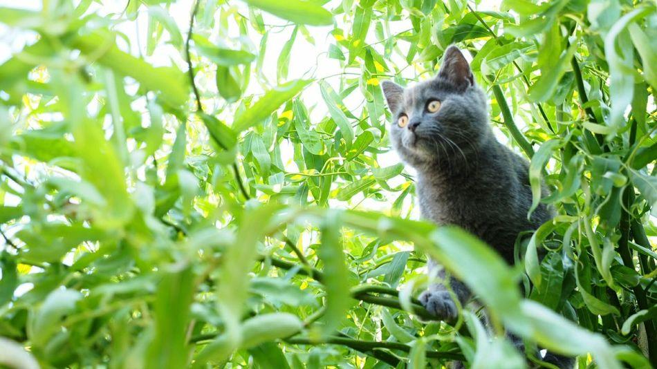 Katze auf der jagd Cat Catoftheday Trees Animals