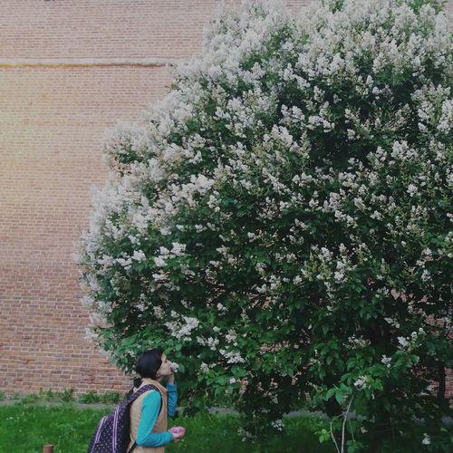сирень ароматсчастья Real People Tree Flower Plant One Person Beauty In Nature People Day Siringa
