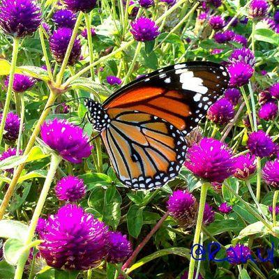 Butterfly Garden Photography Garden Plants Flower & Butterfly Butterfly Garden Butterflys