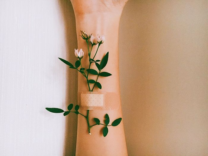 Heal Indoors  Leaf Plant Growth Human Body Part Close-up Flower Home Interior Fragility Low Section White Background One Person Nature Day Freshness Human Hand People Wound Fresh On Market 2017