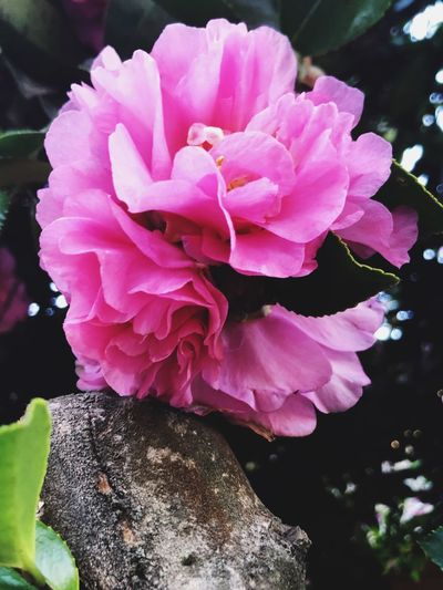 Check This Out Flower Nature Beauty In Nature Petal Pink Color Close-up Freshness Outdoors Day Fragility Flower Head