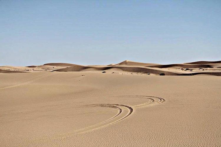 Desert Sunny