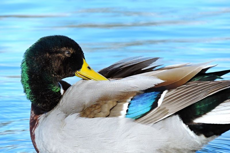 Close-up of duck on lake