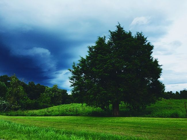Tree alone. Tree Grass Tranquil Scene Tranquility Landscape Field Growth Sky Scenics Green Color Beauty In Nature Cloud - Sky Non-urban Scene Cloud Day Grassy Outdoors Blue Cloudy