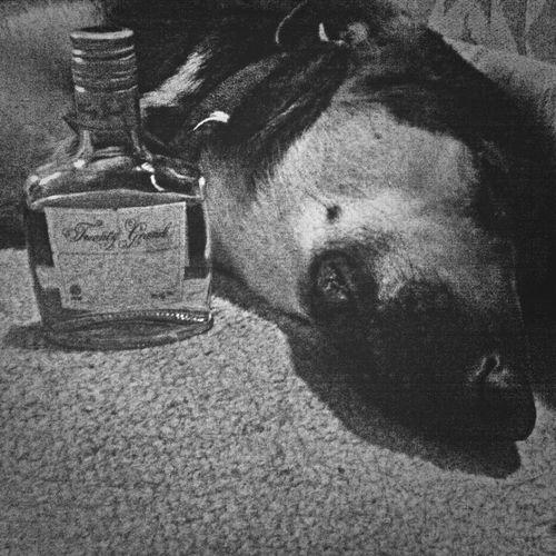 Drinkresponsible No I'm Not Alcoholic Blackandwhite Photography