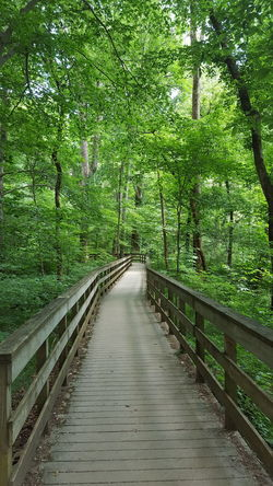 The Way Forward Green Color Nature Day Outdoors No People Beauty In Nature Tranquility Footbridge Forest My Point Of View Solitude Lifestyle Paths Of Life Nature Beauty In Nature Green Color Freshness Scenics Kentucky  The Week On EyeEm Kentucky Woods Mix Yourself A Good Time