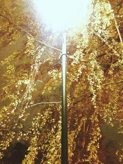 Golden Tree No People Low Angle View Nature Outdoors Beauty In Nature Sky Golden Leaves Branches And Leaves Branch Of A Tree Street Lamp Winter Golden Color