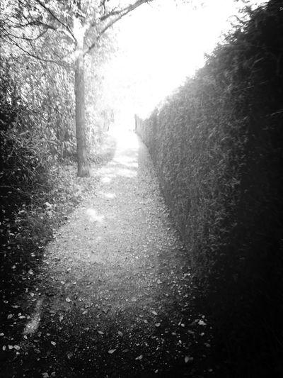 Taking Photos Landscape_Collection Monochrome Blackandwhite