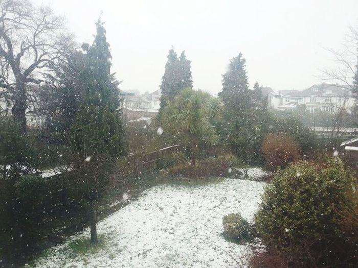 Let it snow Nature
