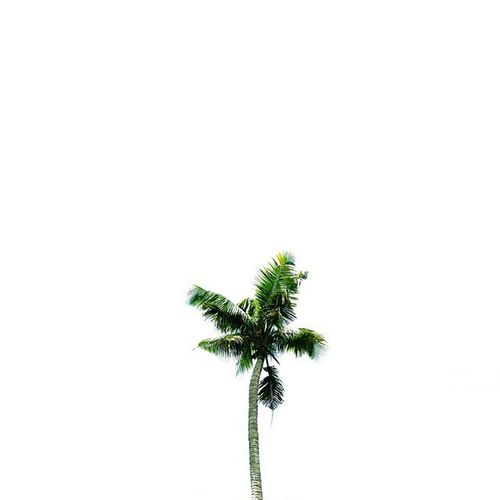 A pretty and lone palm tree VSCO Vsconature Nothingisordinary_ Letterp_nio