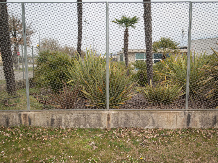 City Nature Growth Nature Net Outdoors Palm Tree Plant Plants Adapted To The City