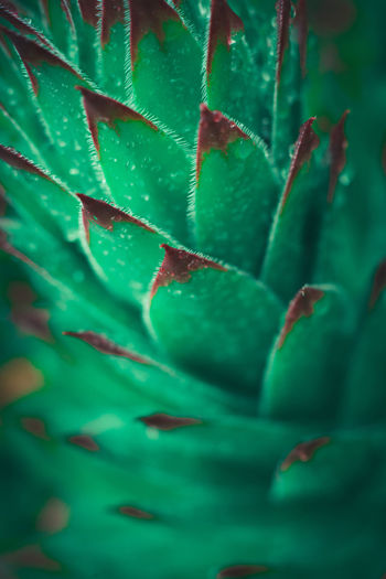Full frame shot of succulent plant