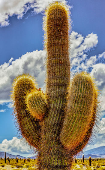 Low angle view of succulent plant on land against sky