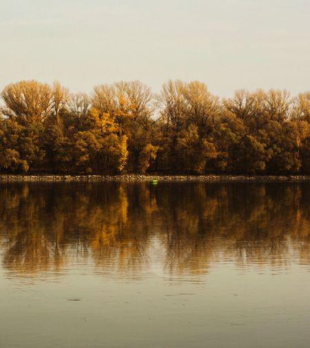 dot Autumn
