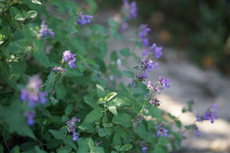 Flower Purple Plant Growth Nature Beauty In Nature Fragility Outdoors Leaf No People Blooming Day Close-up Freshness EyeEm Nature Lover Light And Shadow Flower Head Garden