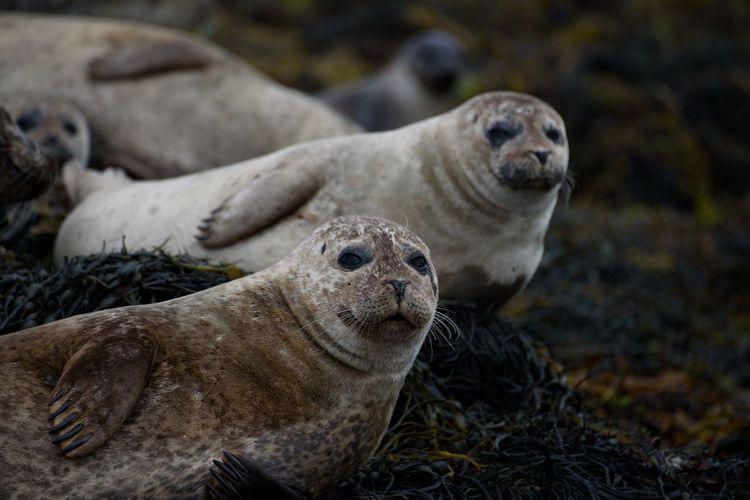 Portrait of seals on field