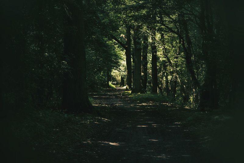Light And Shadow Eyem Gallery Walking In The Woods Fine Art Photography Eyem Best Shots Inspired Light