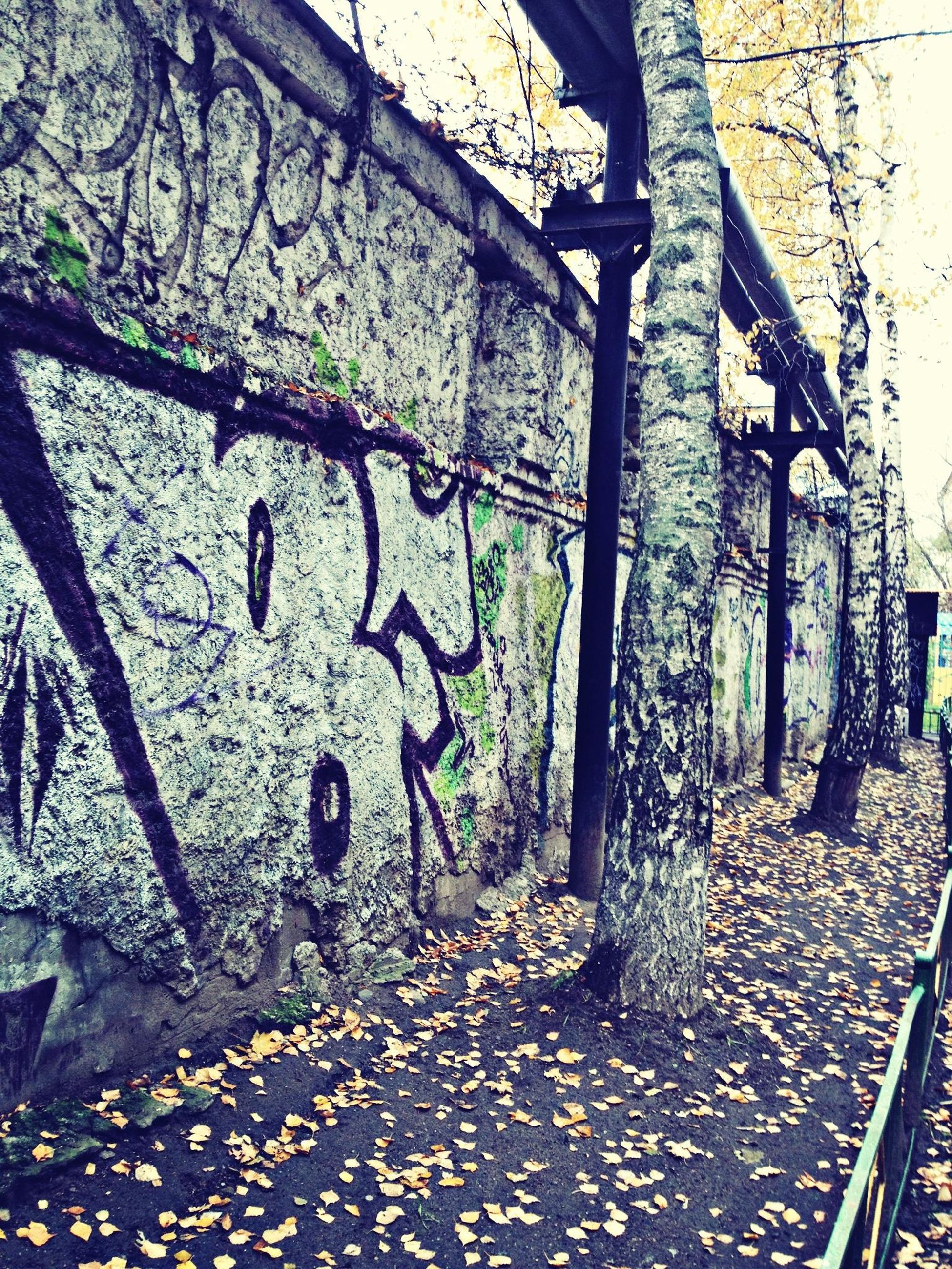 graffiti, art, creativity, wall - building feature, art and craft, text, day, western script, wall, plant, outdoors, street art, messy, communication, no people, abandoned, human representation, built structure, leaf, damaged