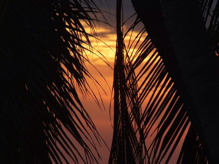Palm leaf against sky during sunset