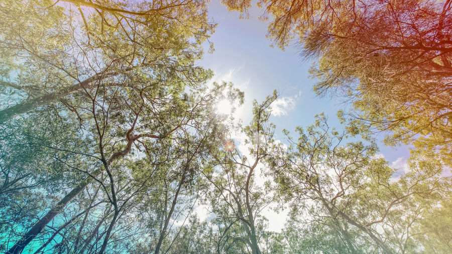 Midday Sun Midday Midday Sunlight Beauty In Nature Branch Day Forest Growth Low Angle View Nature No People Outdoors Scenics Sky Tranquility Tree