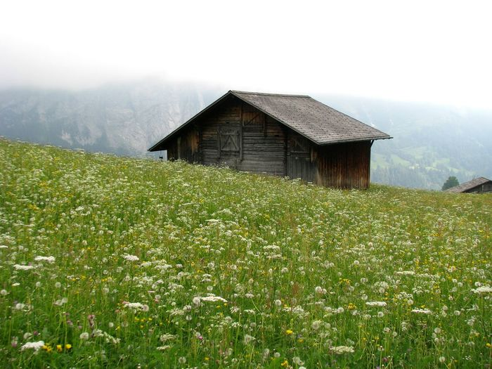 Barn On Flowering Field