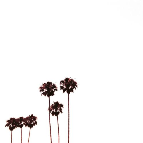 Flower Growth No People White Background Palm Tree Studio Shot Petal Nature Fragility Flower Head Freshness Beauty In Nature Tree Day Outdoors Close-up