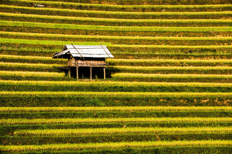 Lonely house on MuCangChai rice terrace Rice Terrace Thailand. Rice Terraces. Philippines Agriculture Beauty In Nature Farm Field Food Grass Growth House House Terrace Landscape Laocai Terrace Lonely House Mountain Mucangchai Terrace, Mucangchai Vietnam Nature Plant Rice Terrace Malaysia Rice Terrace Myanmar Rice Terraces Sand Sapa Terrace, Terraced Field