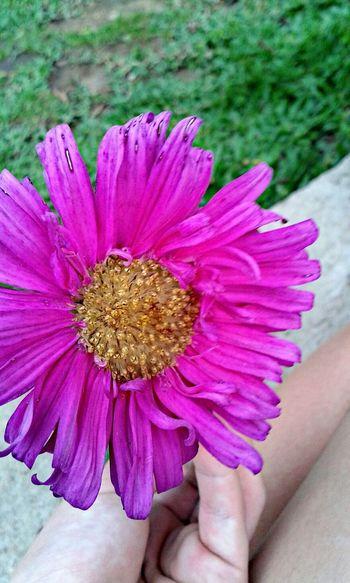 Flor ❤❤❤