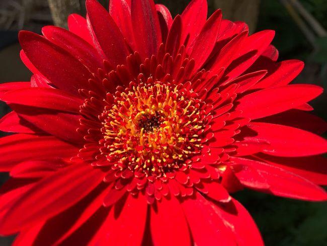 Flowering Plant Flower Petal Inflorescence Flower Head Fragility Freshness