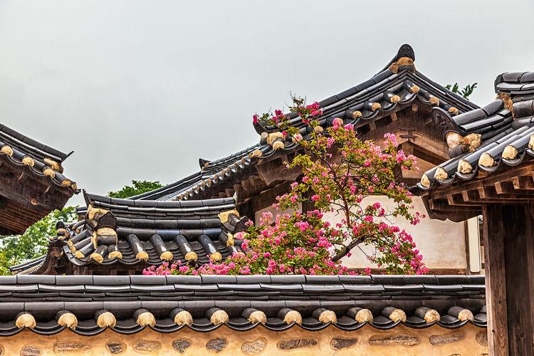 Flowering tree amidst traditional buildings against sky