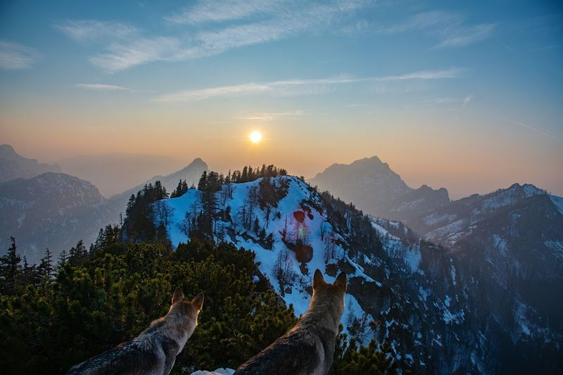 Wolf on the mountain Holiday Tourism View Hiking Destination Chilling Travel Copy Space Wolfzuachiv Wolf Mountain Sky Scenics - Nature Mountain Range Beauty In Nature Sunset Landscape Environment Cloud - Sky Nature Tranquility Tree Pinaceae Tranquil Scene Winter Sun Snow Mountain Peak Pine Tree Outdoors