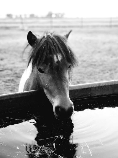 Portrait of horse standing in ranch
