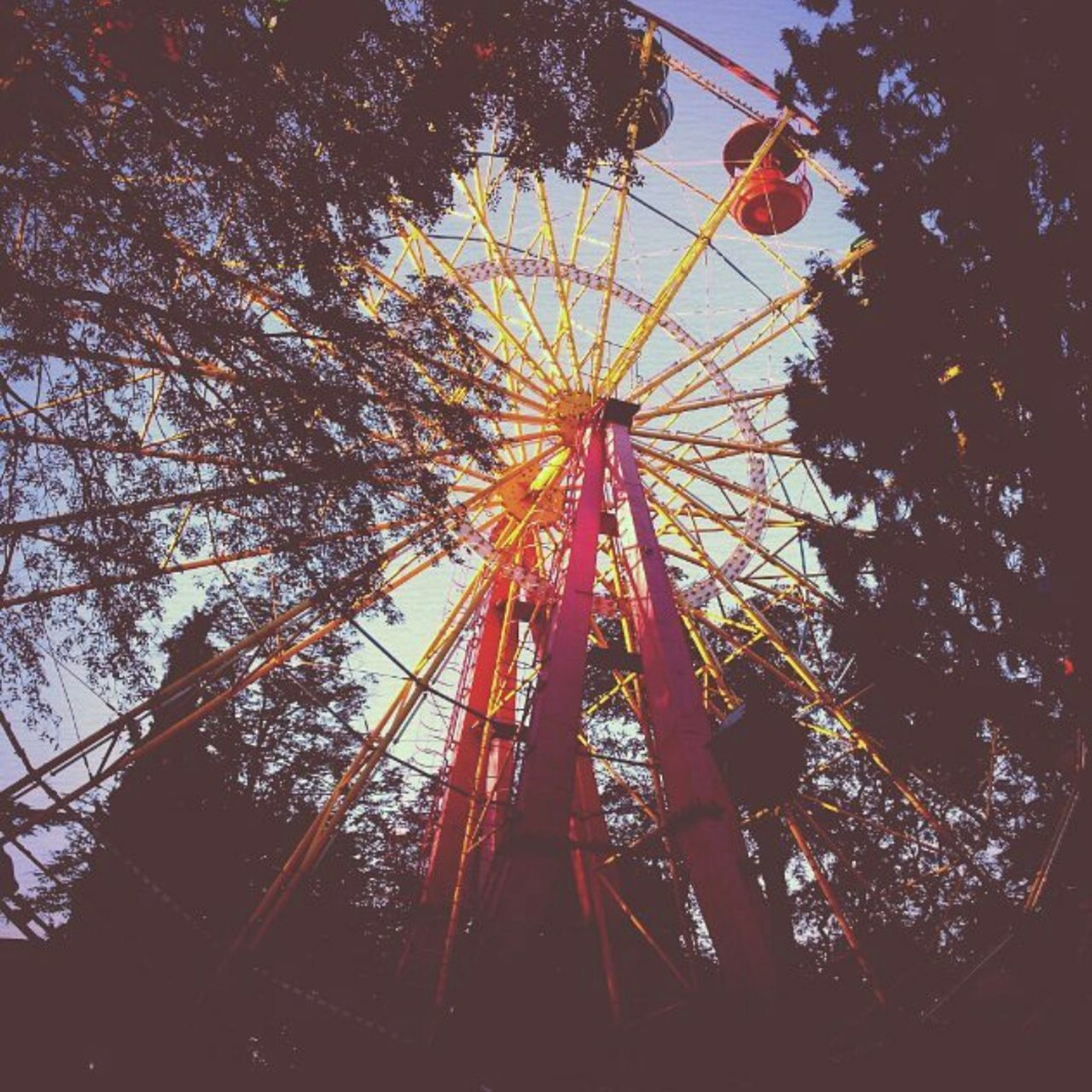 amusement park, low angle view, tree, arts culture and entertainment, amusement park ride, ferris wheel, no people, outdoors, sky, day, branch