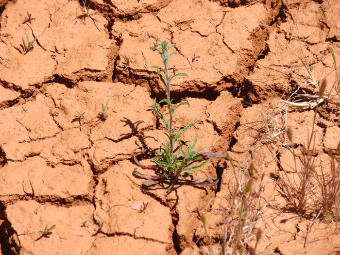 Arid Climate Background Backgrounds Conceptual Cracked Day Desolation Disaster Drought Dry Environment Environment Protection Environmental Conservation Environmental Disaster Environmental Issues Full Frame Landscape Misery Nature No People Outdoors Poverty Sadness Texture Textures And Surfaces