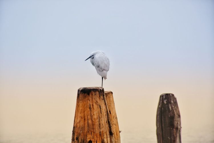 Bird Perching Water Stork Wooden Post Animal Themes Sky