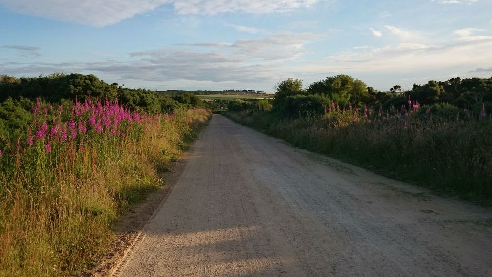Dirt track Day Dirt Road Flowers Growing Landscape Outdoors Relaxing Moments Remote Scotland Tranquil Scene Tranquility Uk Vanishing Point