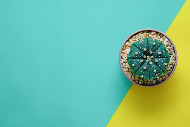 Blue Blue Background Circle Close-up Colored Background Copy Space Craft Creativity Directly Above Geometric Shape Green Color Indoors  Luxury Multi Colored No People Shape Shiny Single Object Studio Shot Turquoise Colored Wealth Yellow