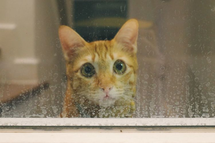 Portrait of a cat seen through window