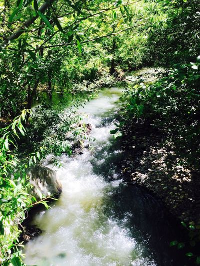 Waterfall Cupertino Foothills Photo by Kristina Sablan Nature Water Flowing Water Beauty In Nature Forest Tranquility Motion Tranquil Scene Outdoors Tree River Scenics No People Day Waterfall Growth