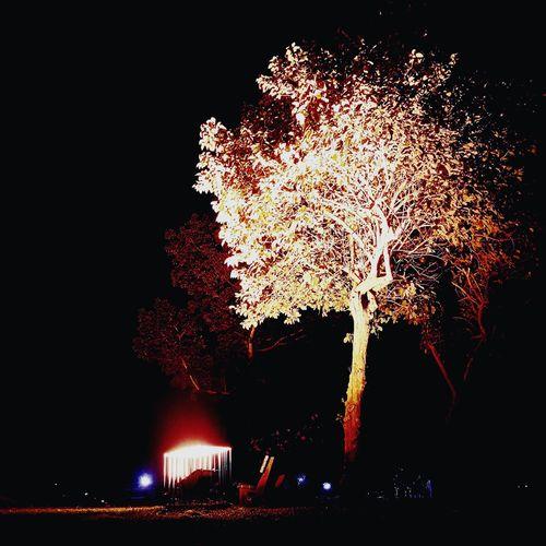 Underneath. Night Tree Illuminated No People Outdoors Sky First Eyeem Photo