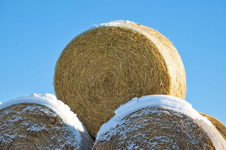 Low angle view of hay bales on field against clear blue sky