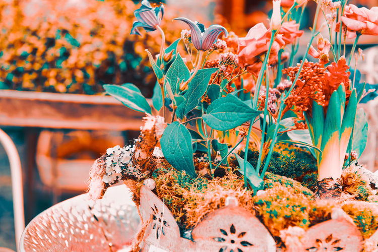 Close-up of flowering plants at market stall