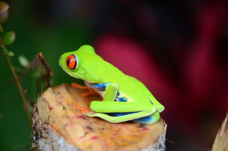 Side view of tree frog
