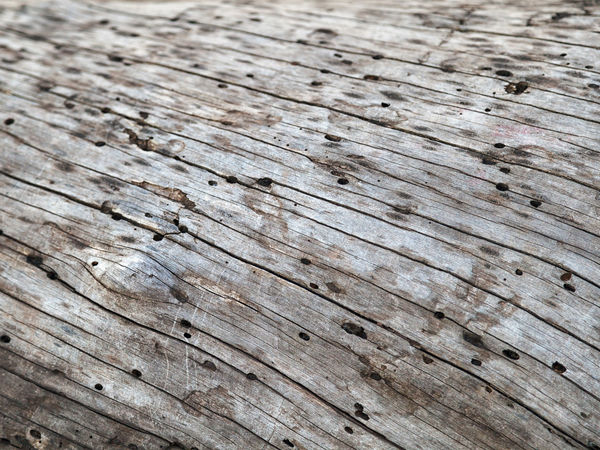 Bark-free tree trunk surface, rich in veins and points. Drawing, natural texture of tree trunk, pine. Nature Plant Shape Tree Trunk Wood Abstract Aged Backdrop Background Bark Texture Brown Detail Material Paper Pattern Pine Tree Rough Texture Skin Surface Texture Timber Trunk Tree Wallpaper Wood - Material Wooden Texture