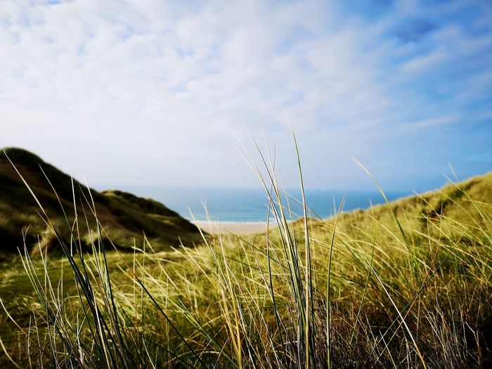 can't explain how I feel Sea Ocean Coastline Sand Dunes Cornwall England Uk Rural Scene Timothy Grass Cereal Plant Field Meadow Agriculture Uncultivated Blue Sky Grass Tall Grass Reed - Grass Family