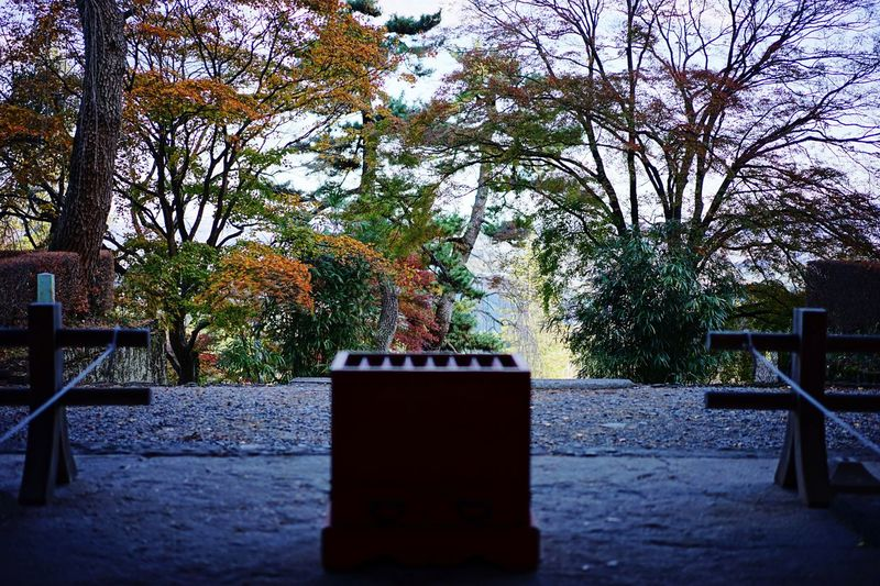 Showcase: November Autumn Leaves from one Japanese Shrine Eyeem Prospective EyeEm Nature Lover Beautufulwiew Japanese Culture Japanese Garden Japanese Style Maple Tree Japanese Maple Flame Eye4photography  Sky And Trees Black Yellow Leaves Red Leaves Green Leaves Taking Photos in Tomioka Gunma Japan 群馬です🍁