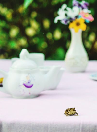 Toad Teaparty