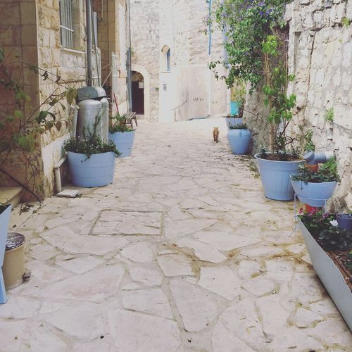 Old city Built Structure Plant Architecture No People Day Türkìz Oldcity Tzfat Vintage Oldie  Religion Holiday Vacation Vacations